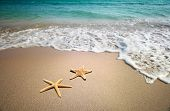 foto of summer beach  - two starfish on a beach - JPG