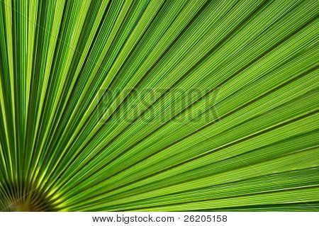 Tropical palm in backlight
