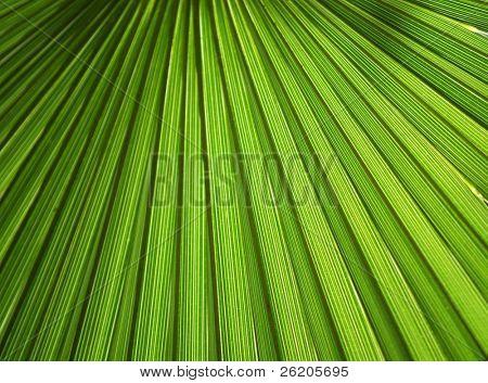 Palm leaf details