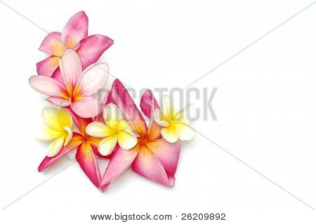Tropical frangipani border