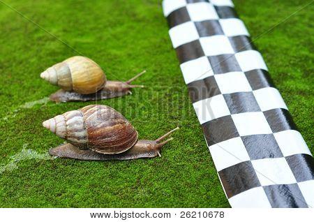 Schnecke Rennen