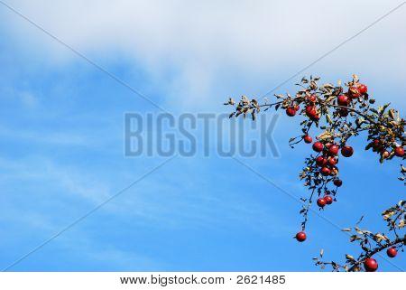 Applebranch