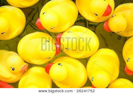 Bunch of rubber ducks floating in a small pool. View from above
