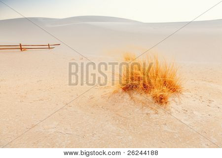 Image of the gypsum dunes and grasses at White Sands