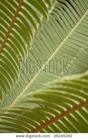 Graceful fern fronds