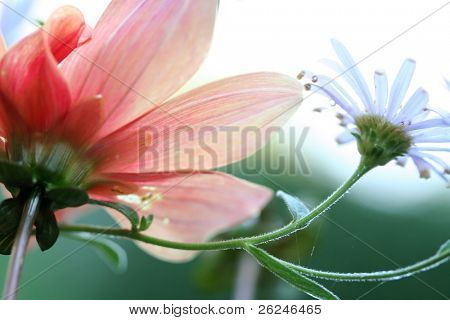 soft floral shot from below with shallow depth of field