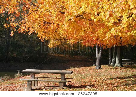 Picturesque fall scene in the park