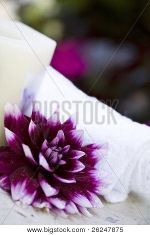 large dahlia with a towel for a spa concept
