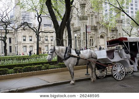Carriage in Chicago outside the old Water Tower Building