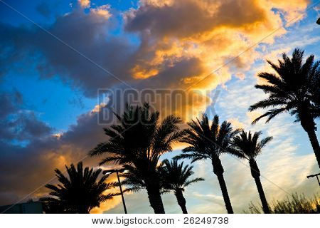 beautiful sunset sky with palm trees