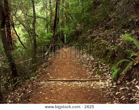 Muir Woods ruta 1