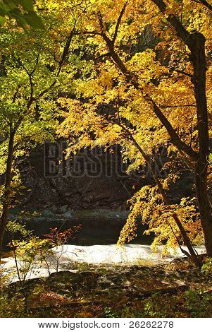 fall golden trees over Vanchin Milogradovka river in russian Primorye