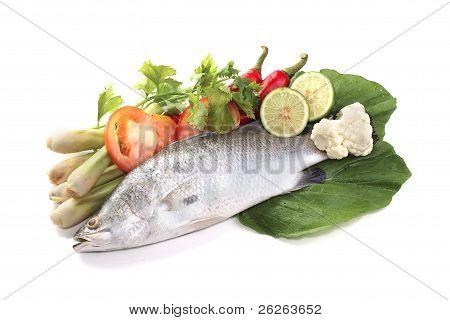 Barramundi Or Asian Seabass