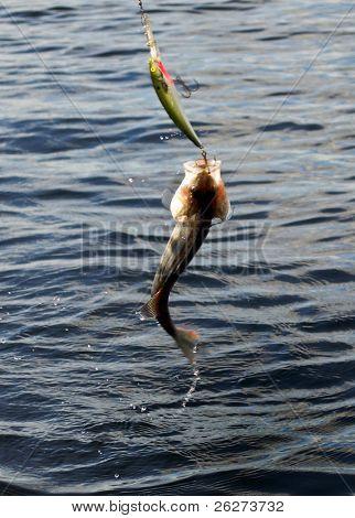 Peixe no Lago