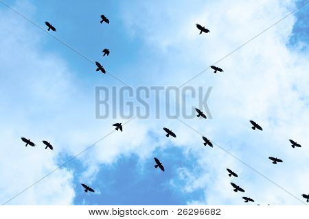 Crows flying against bright blue sky