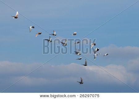 Flock of birds flyin in the sky