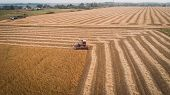 Harvester Machine Working In Field . Combine Harvester Agriculture Machine Harvesting Golden Ripe So poster