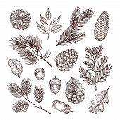 Sketch Fir Branches. Acorns And Pine Cones. Christmas, Winter And Autumn Forest Elements. Hand Drawn poster
