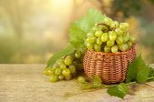 Ripe Grape Cluster Of White Grapes In A Basket On A Wooden Table With Green Leaves Of Grapes. Vintag poster