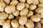 Crude Walnut With Nutshell For Background Of Texture poster