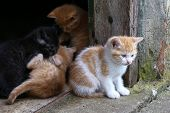 Kittens / Little Redhead Kitten / Little Red Kitten poster