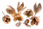 foto of beechnut  - beech nutswith shell isolated on white background - JPG