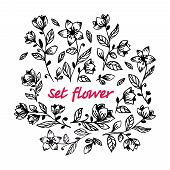 Hand Draw Black Flower Set. Collection Of Hand Drawn Flowers And Plants. Vector Illustrations In Ske poster