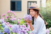 Gardening In Bushes Of Hydrangea. Girl Smiles In Sunny Summer Country Garden. Flowers Are Pink, Blue poster