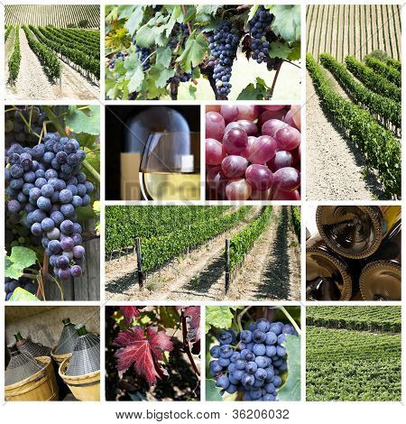 Vineyard Collage