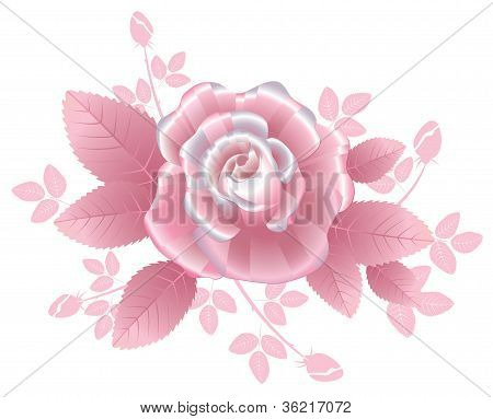 Pink silky rose in romantic style