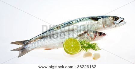 Mullet And Mackerel