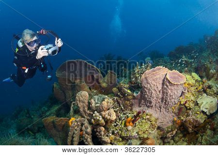 Female Underwater Photographer In St Lucia