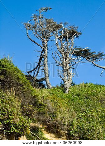Windswept Trees On A Clear Sunny Day