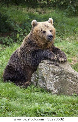 Brown bear on rocks