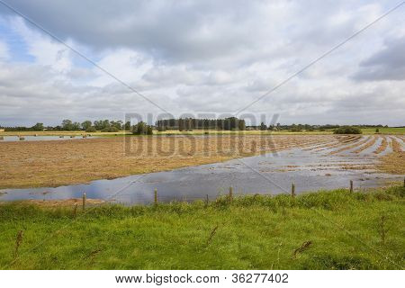 Flooded Summer Hay Fields