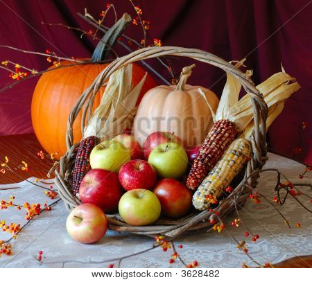 Autumn harvest of pumpkins Indian corn, bittersweet and apples in basket
