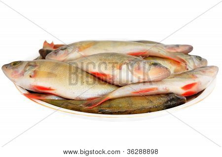 Rudd (scardinius Erythrophthalmus) Fish