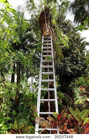 Tropical Landscaping With Ladder