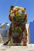 The Giant Floral Sculpture Puppy In Guggenheim Museum