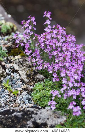 Pink Flower And Rock