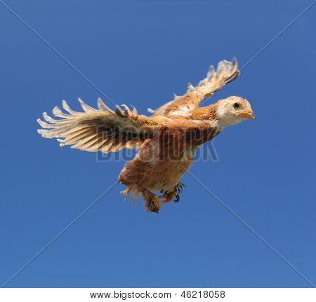Rote Hühnchen fliegen In den Himmel mit Flügeln verteilt
