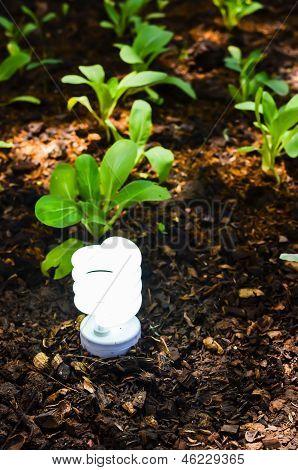 Green Light Technology .