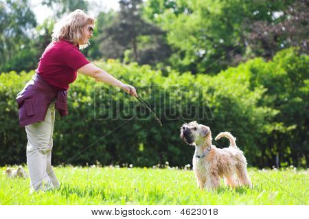 Woman Ad Her Dog On Green Grass