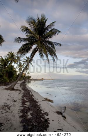 Palm Tree At Sunset On The Shore