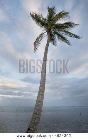 Lone Palm Tree At Sunset