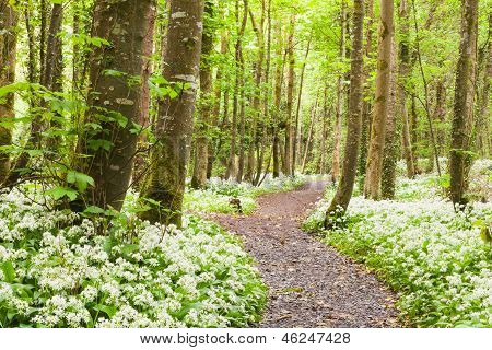 Forest With White Flowers.