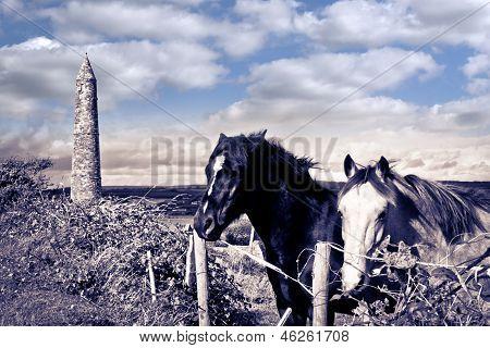 Pair Of Wild Irish Horses And Ancient Round Tower