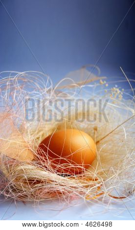 Background With A Nest And Egg