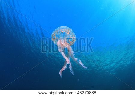 Jellyfish Underwater