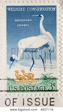 Wildlife Conservation Whooping Cranes